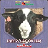 Sheep (Las Ovejas), JoAnn Early Macken, 0836842901