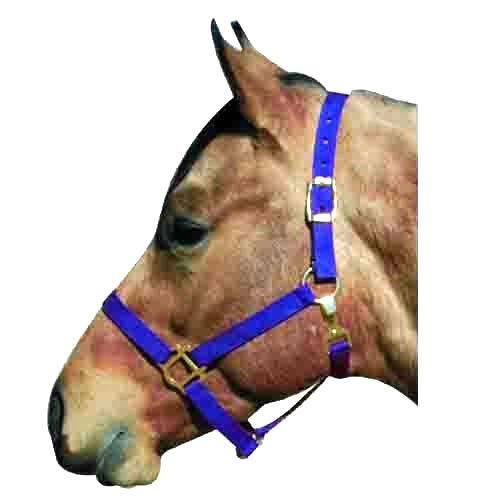 Intrepid International Economy Poly Horse Halters, Horse Blue Economy Halter