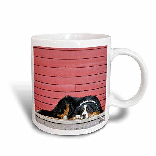 - 3dRose 88823_1 Colorado, Breckenridge Bernese Mountain Dog-Us06 Bja0055-Jaynes Gallery Ceramic Mug, 11 oz, White