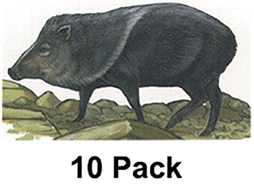 Javelina Target (Maple Leaf NFAA Animal Faces Group 3 Javelina)