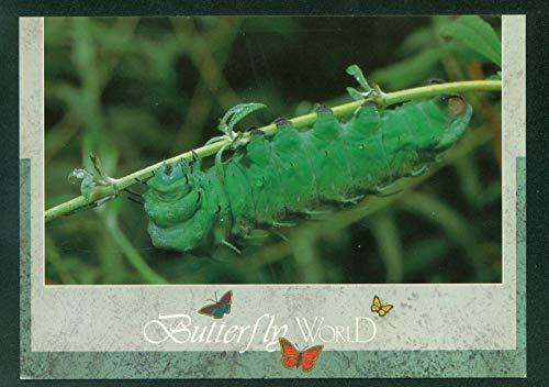 - Butterfly World Atlas Moth Green Caterpillar at Coconut Creek Florida Postcard