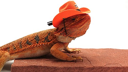 Bearded Dragon Cowboy Hat, Orange - Buy Online in Kuwait