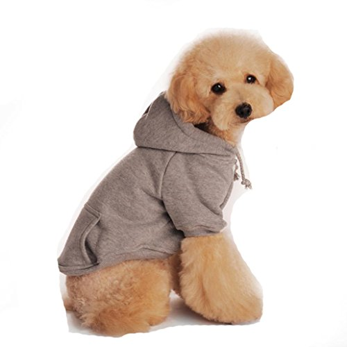 Cute Dog Outfits - 8