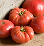 David's Garden Seeds Tomato Beefsteak German Johnson SL3815 (Red) 50 Non-GMO, Organic, Heirloom Seeds