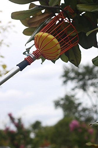 Fruit Picker Catcher, C2F 13 ft Garden Fruit Picking Tool with Lightweight Aluminum Telescoping Pole