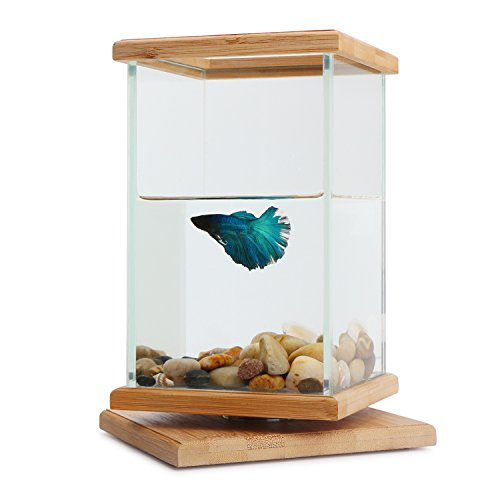 Rotatable fish bowls segarty cool unique design small for Square fish tank