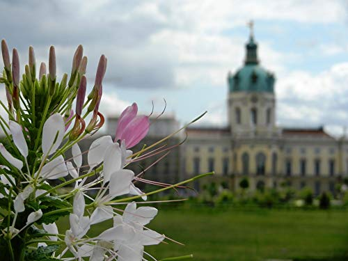 Home Comforts Canvas Print The Palace Castle Monument Sky Charlottenburg Vivid Imagery Stretched Canvas 32 x 24