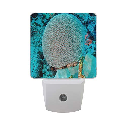 (Night Light Most Beautiful Coral Reefs in The World Night Lamp LED Sensor Auto on/Off Led Plug in Wall Lights 2 Pack)