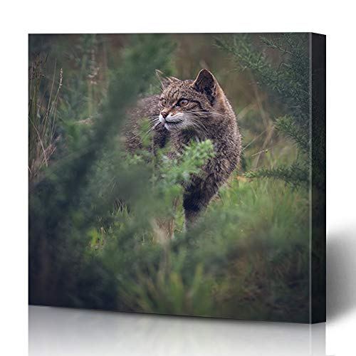 Ahawoso Canvas Prints Wall Art 12x16 Inches Creature Green Scottish Wildcat Undergrowth Foliage Britain British Carnivore Cat Conservation Design Decor for Living Room Office Bedroom