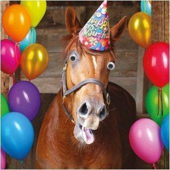 Carte D Anniversaire Happy Birthday Amusant Animal Nitrire Cheval