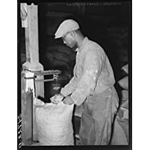 Photo: Sewing up sack of cotton seed meal. Cotton seed oil mill. McLennan County,Texas