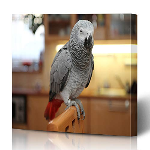 Ahawoso Canvas Prints Wall Art 12x16 Inches Wing Gray Beak African Grey Parrot On Perch Bird Chair Congo Cute Domestic Design Sitting Decor for Living Room Office Bedroom