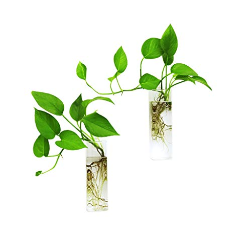 Ivolador 2PCS Wall Hanging Glass Plant Terrarium Container Rectangle Shape Perfect for Propagating Hydroponic Plants Home Office Garden Decor Wedding