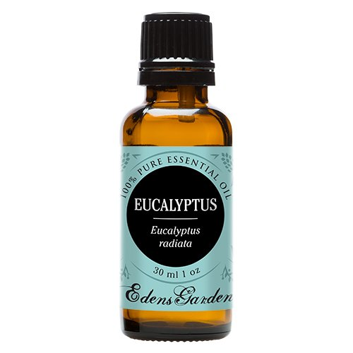 Edens Garden Eucalyptus- Radiata 100% Pure Undiluted Therapeutic Grade GC/MS Certified Essential Oil