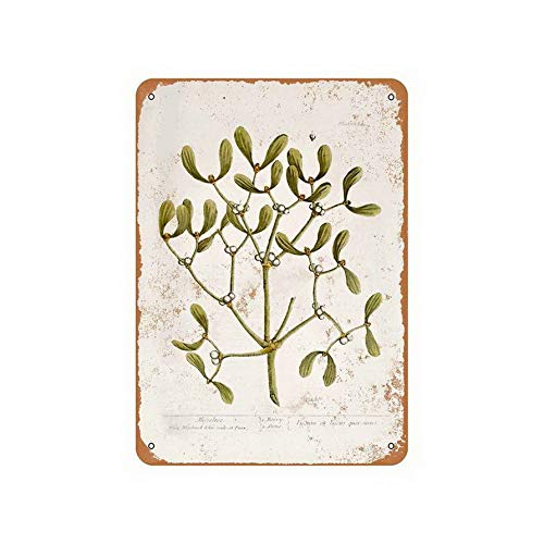 TYmall Mistletoe Botany Plate 12X16 Inches Coffee Houes or Home Metal Tin Sign