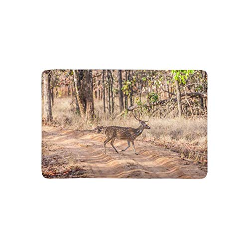 - InterestPrint Chital or Cheetal Spotted Deer in Bandhavgarh National Park in India Doormat Non-Slip Indoor and Outdoor Door Mat Rug Home Decor Floor Mats Rubber Backing, 23.6
