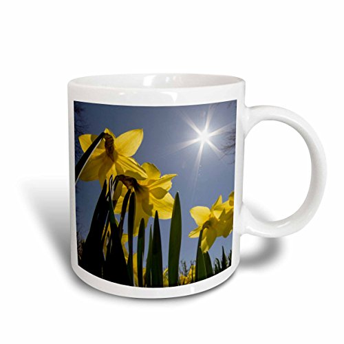 3dRose 3dRose Daffodils, spring, Freeport, Maine - Ceramic Mug, 15-ounce (mug_205277_2), , - Freeport Maine Outlets