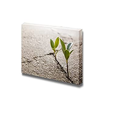 Canvas Prints Wall Art - Weed Growing Through Crack in Pavement | Modern Wall Decor/Home Art Stretched Gallery Canvas Wraps Giclee Print & Ready to Hang - 24