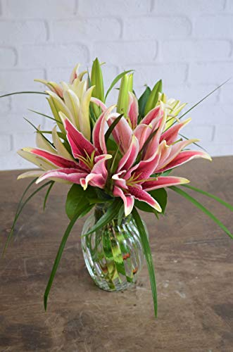 Stargazer Daydreams - Fresh Flowers Hand ()