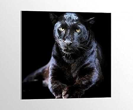 alu-dibond Puma Negro Pantera Jaguar Animal Imagen en aluminio ...