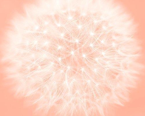 Dandelion Photography, Modern Flower Wall Decor Picture, Macro Photography, Fine Art Print 8x10, 11x14, 12x16, Peach Wall Art, Baby Girl Room, Nursery Art, Bedroom Artwork by Natural Photography Spa