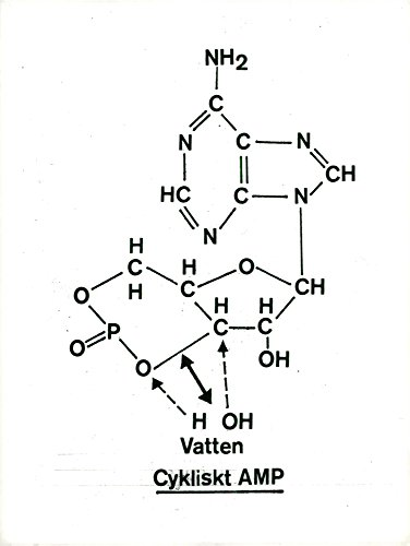 Cyclic Amp - Vintage photo of Nobel Prize 1971. Earl Sutherland receives the Nobel Prize in Physiology For his discoveries regarding hormone action mechanisms drawing of cyclic AMP