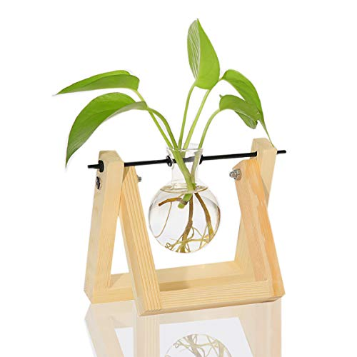 Ivolador Desktop Glass Planter Bulb Vase with Retro Solid Wooden Stand and Metal Swivel Holder for Hydroponics Plants Home Garden Wedding Decor