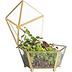 NCYP Vintage Decorative Jewelry Chest Geometric Terrarium Window Box Storage Display Case Pentagon Shape Clear Glass and Brass Tone Air Plant Planter Geo Metal Slanted Top Swing Lid