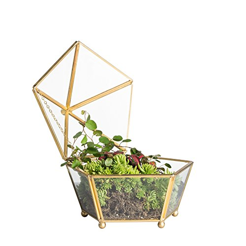 Vintage Decorative Jewelry Chest Geometric Terrarium Window Box Storage Display Case Pentagon Shape Clear Glass and Brass Tone Air Plant Planter Geo Metal Slanted Top Swing Lid (Terrarium Brass)