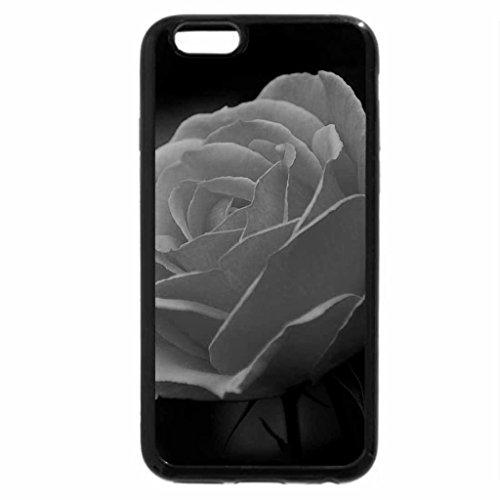 iPhone 6S Case, iPhone 6 Case (Black & White) - A orange beautiful rose.