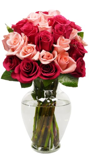 Benchmark Bouquets 2 Dozen Blushing Beauty Roses, With Vase (Fresh Cut Flowers)