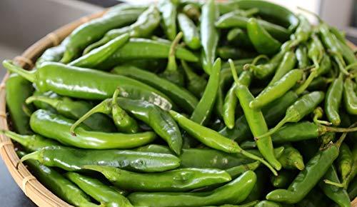 Pepper Hybrid Hot (Korean Long Green F1 Hybrid Hot Pepper Seeds (25 Seeds))