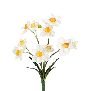 "10"" Narcissus Bush x5 White Yellow (pack of 36) 83"
