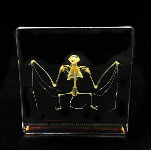 Real Bat Skeleton Specimen in Acrylic Block Paperweights Science Classroom Specimens for Science Education(3x3x1 Inch)
