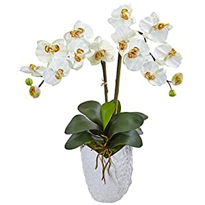 Nearly Natural Double Phalaenopsis Orchid Silk Arrangement, Cream 120