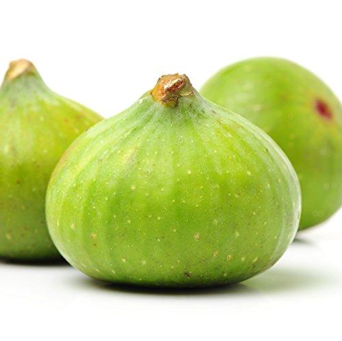 (Lattarula Italian Honey Fig Ficus Carica Live Plant Blanche Royale, Marseilles )