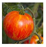 buy David's Garden Seeds Tomato Beefsteak Mr. Stripey (Multi) SL0089 50 Non-GMO, Heirloom Seeds now, new 2019-2018 bestseller, review and Photo, best price $7.95