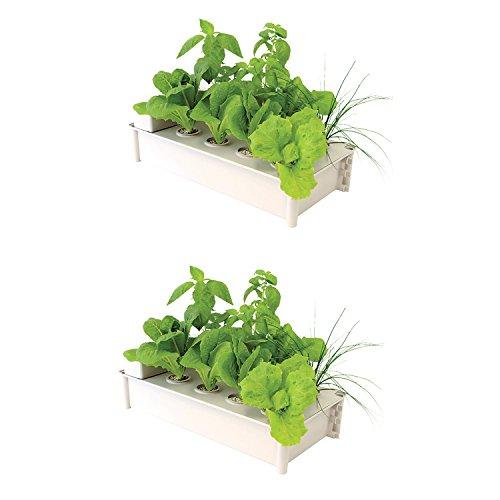Hydrofarm Salad Box Hydroponic Soil-Free Salad Greens Growing Kit (2 Pack)
