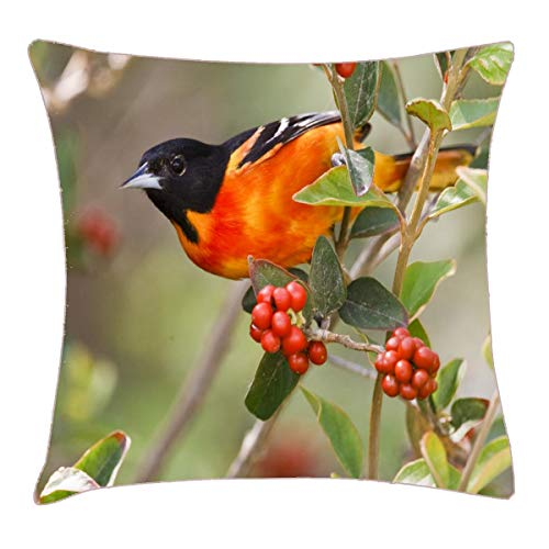 HFYZT South Padre Island, Texas, USA, Baltimore Oriole Pillow Cover Standard Throw Pillowcase 18X18 Inch
