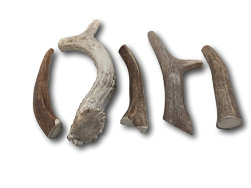 Premium Large Antler (+/- An Ounce Or Two) Variety Pack! No Pieces Under 6''! Top Dog Chews Brand! (One Pound) by Top Dog Chews (Image #3)