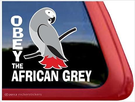 Amazoncom Obey The African Grey Parrot Bird Vinyl Window Decal - Bird window stickers amazon