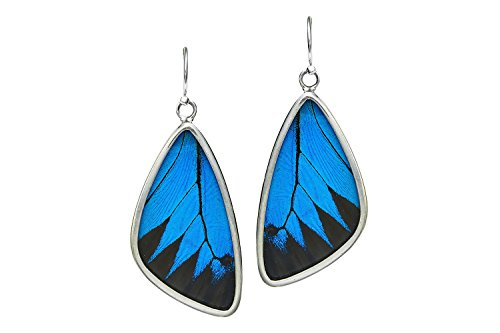 Real Butterfly Wing Earrings in Sterling Silver - Style #2 by Astro Gallery Of Gems