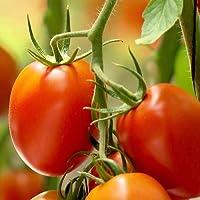 Tomate Rio Grande - 25 semillas de Portugal