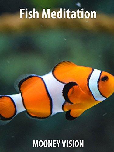 fish-meditation