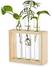 Glazen Planter Kweekstation Moderne Proefbuis Bloem Kiem Vaas in Houten Standaard Rek Tafelblad Terrarium voor Hydrocultuur Planten Stekken Kantoor Huisdecoratie Geschenk voor Plantenliefhebber