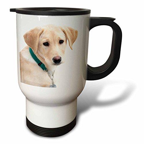 abrador Retriever Puppy Dog Janell Davidson