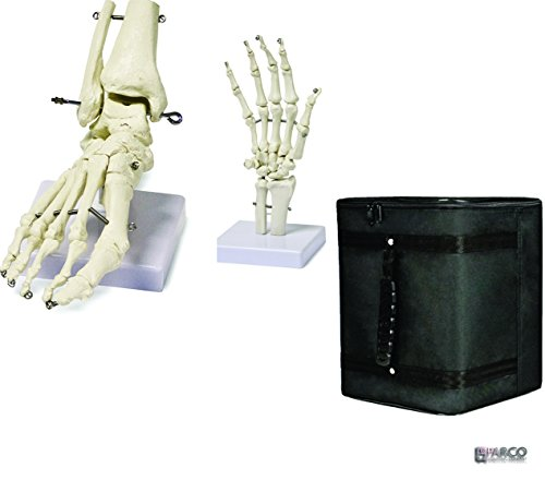 Parco Scientific PBM-B5 Human Foot Skeleton Model on Base, and Human Hand Skeleton Model on Base, Life Size with carrying case