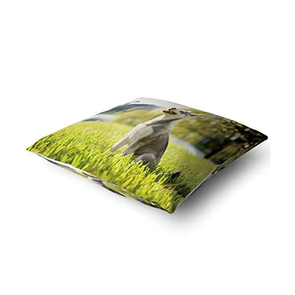 "Nine City Alaskan Klee Kai Puppy Sitting on Grass Looking up,Pillow Case Sofa Bed Throw Cushion Cover Decoration 32"" X 32"" 2"