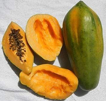 PlenTree Seã±Ora roja de la Papaya (Carica Papaya) Mu Gua Enanos Papaya Fruta Tropical del áRbol 10 + Semillas