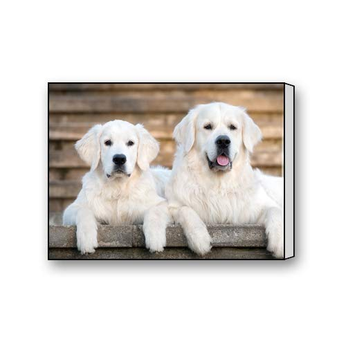 Two White Golden Retriever Puppy Art Paintings Canvas Prints for Living Room Bedroom Home Office Decor 16